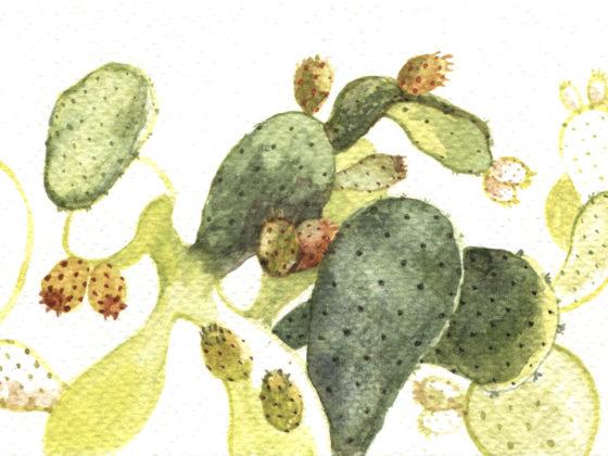 patmos-2018_cactus